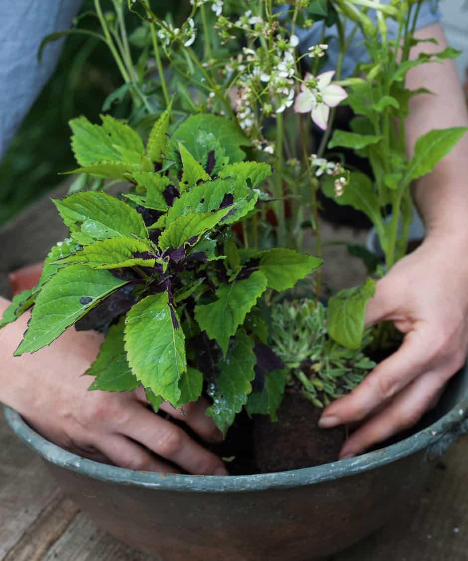 botanical_planter_homestyle_4
