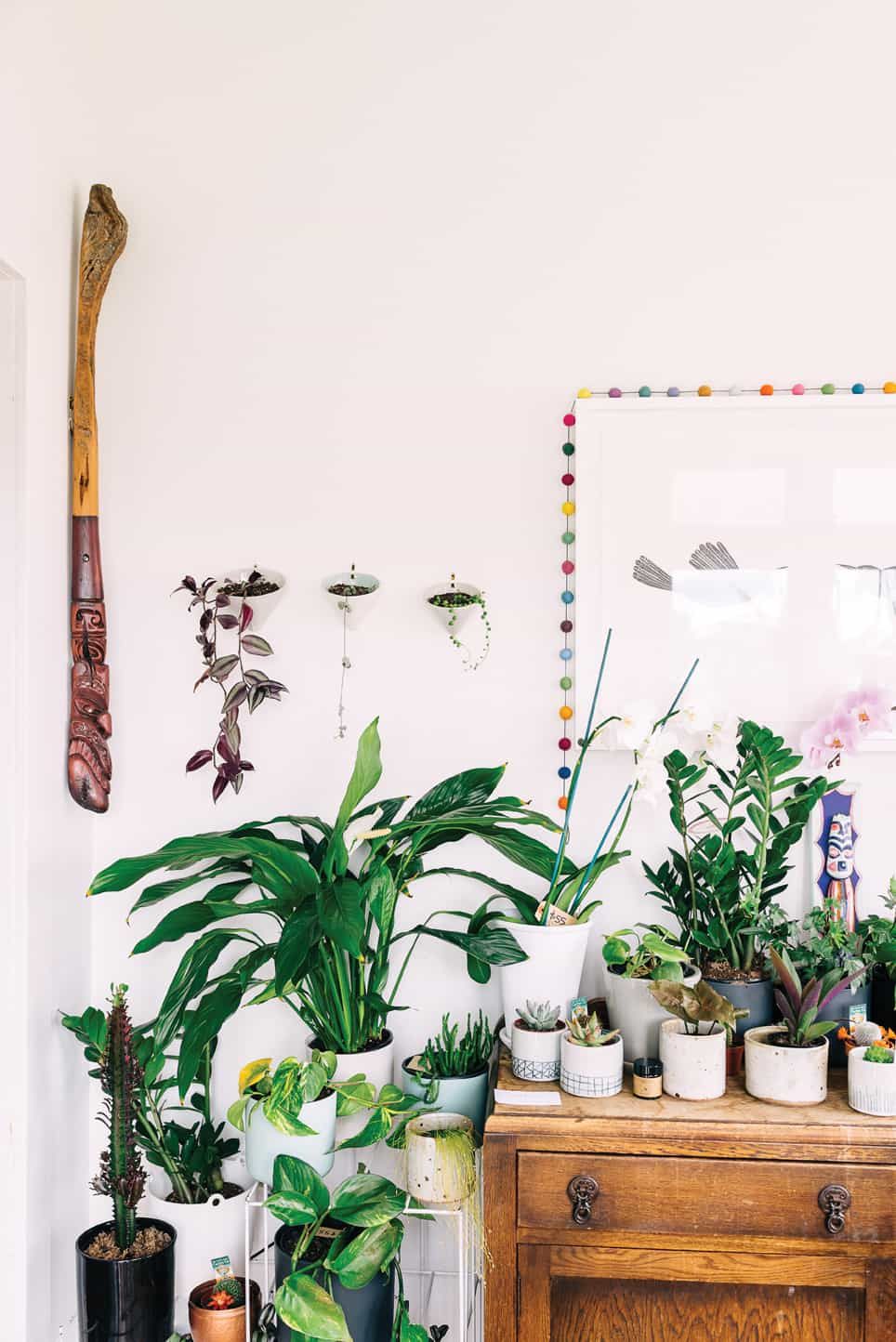 sill life plants homestyle 3