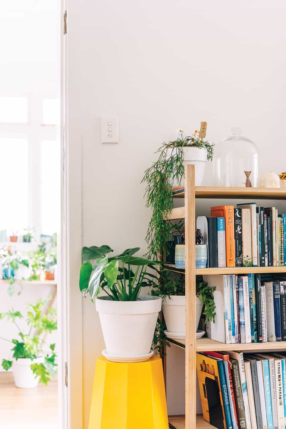 sill life plants homestyle 5