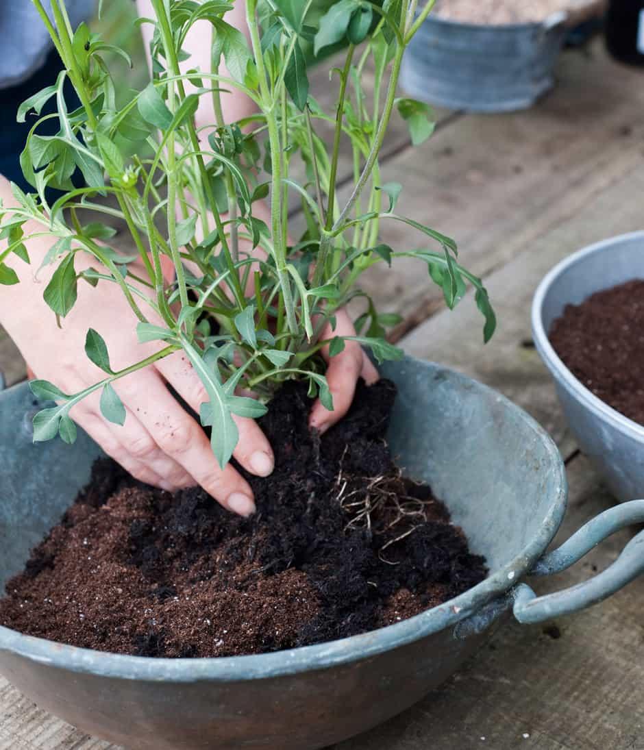 botanical_planter_homestyle_3