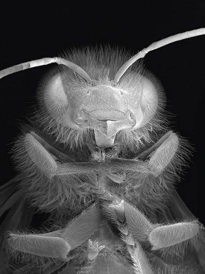 NOBLE_DEAD-BEE-PORTRAIT#14_MASTER